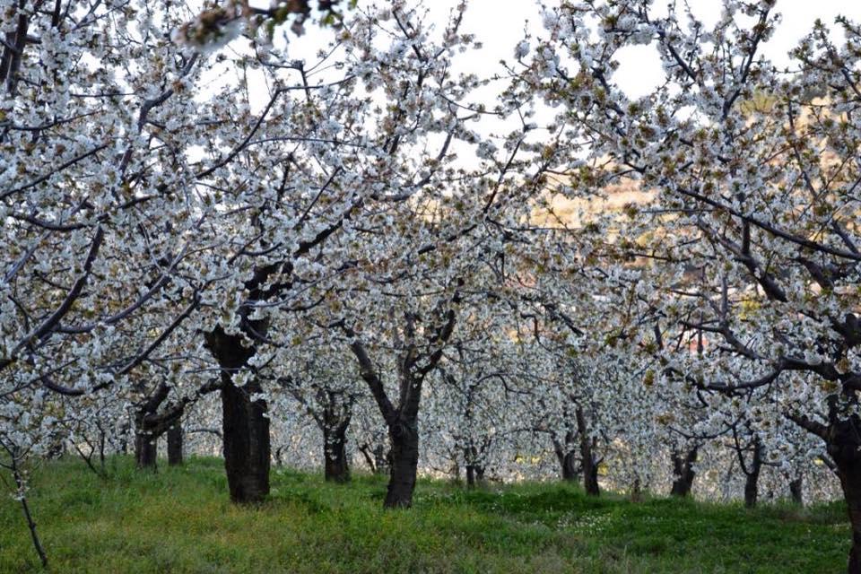 Comboio 'Cerejeiras em Flor' de Lisboa para o Fund�o