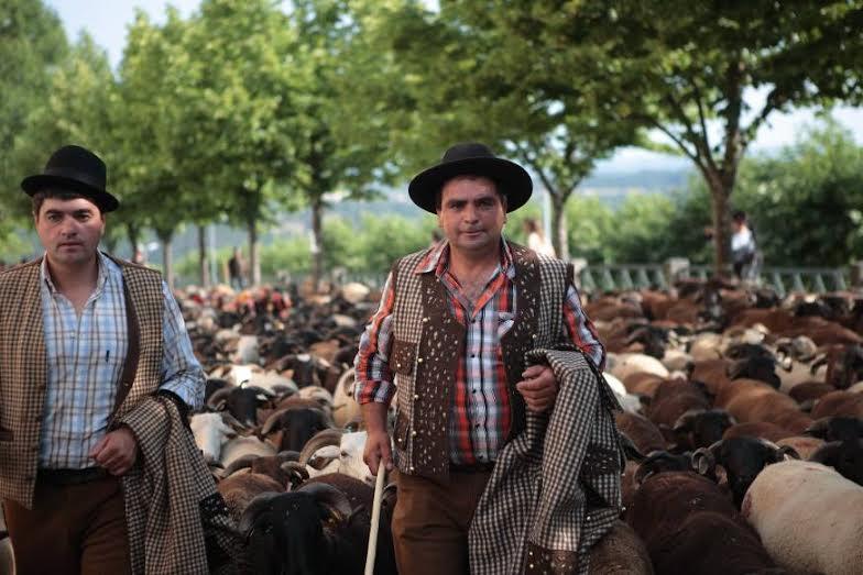 Mil ovelhas sobem � serra acompanhadas por pastores e turistas